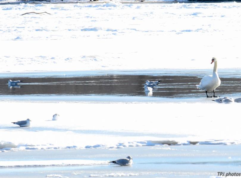 CT river frozen 2015