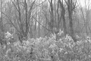 Meadows Marsh