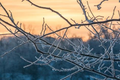 dawn_frozen_air