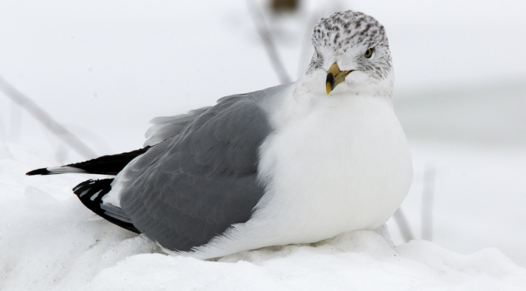 Gull Asking For A Picture