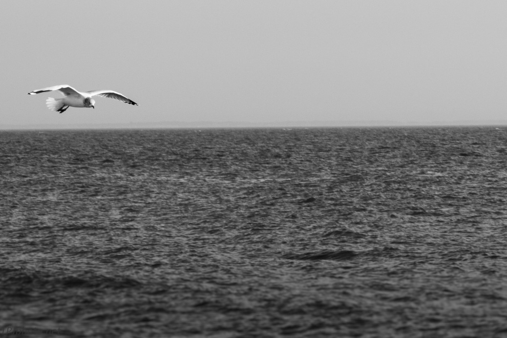 Connecticut Gulls