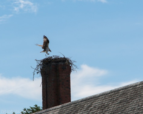 Abandon Spires with Osprey