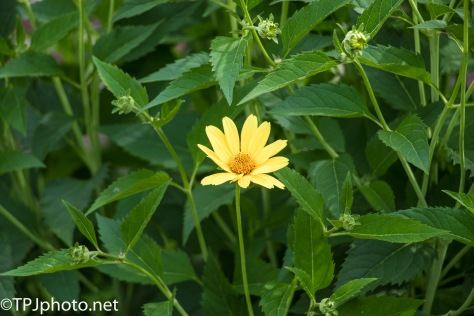 Single Flower Connecticut Gardens