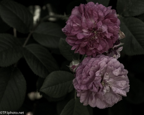 Flowers Gone By
