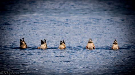 Ducks Version Of Happy World Photography Day