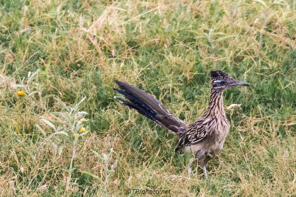 Road Runner - Click To Enlarge