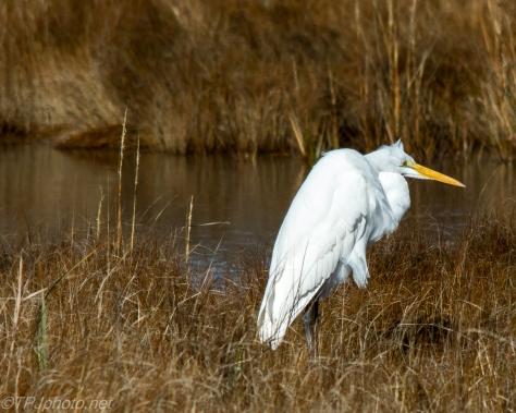 Cold Egret - Click To Enlarge