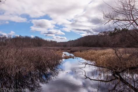 Early Winter Marsh - Click To Enlarge
