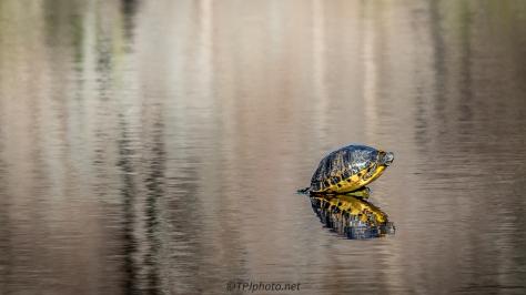 Big Turtle Little Rock - Click To Enlarge