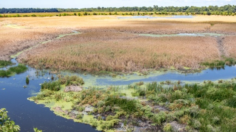 Ashley River Marsh, South Carolina - Click To Enlarge