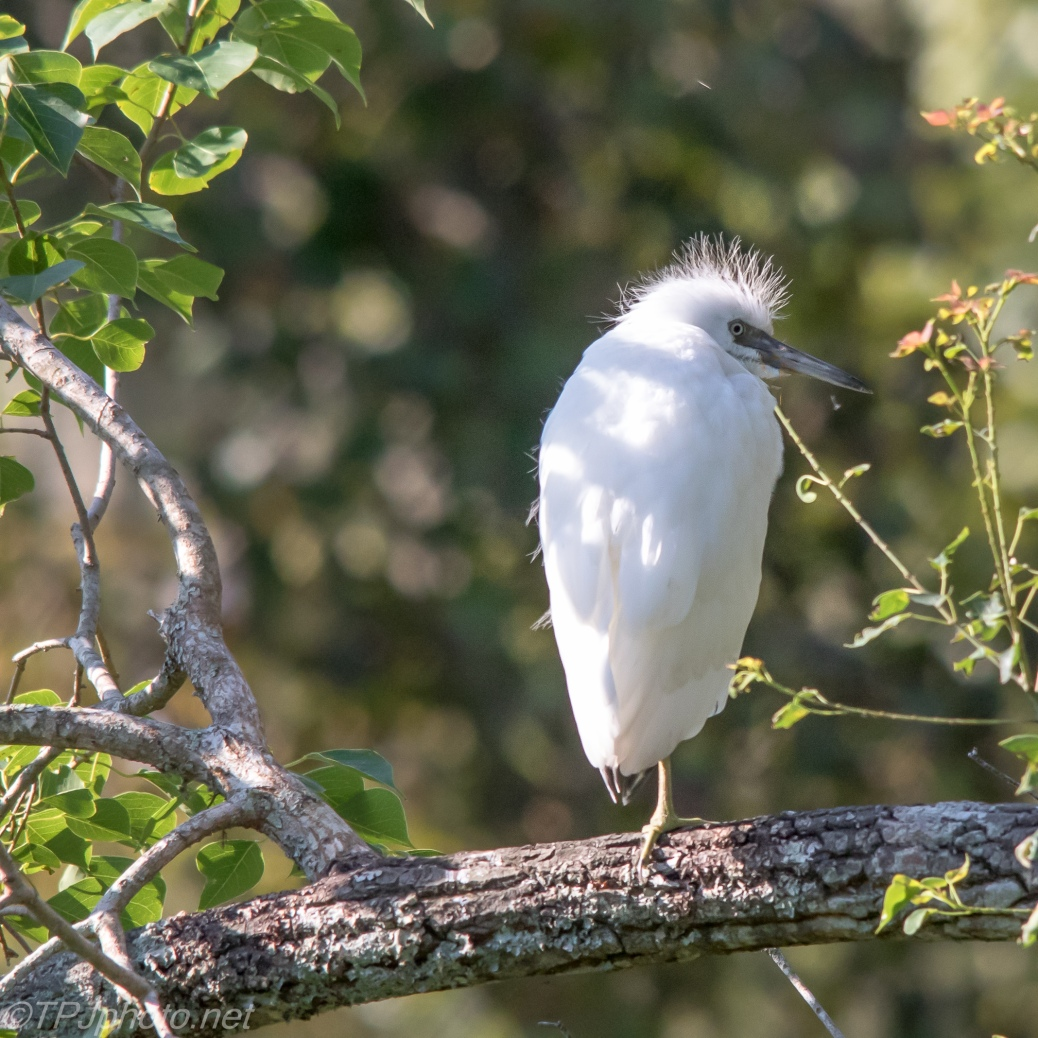 Annoyed Young Heron - Click To Enlrage