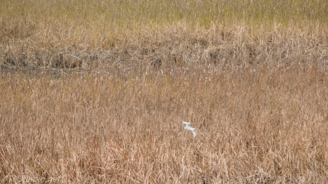 Perspective Of A Marsh - Click To Enlarge