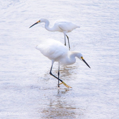 Bright Light Bright Birds - Click To Enlarge