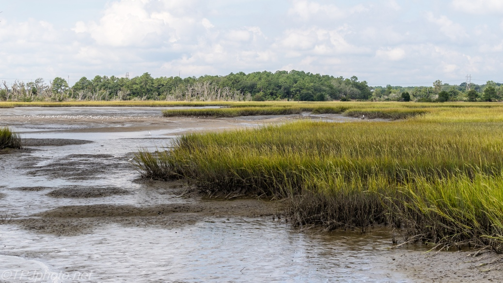 Salt Marsh - Click To Enlarge