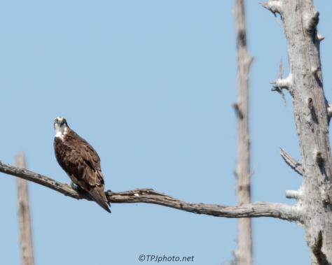 Tupelo Swamp Birds - Click To Enlarge