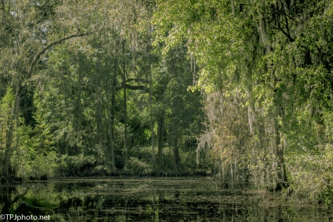 Inside A Swamp - Click To Enlarge