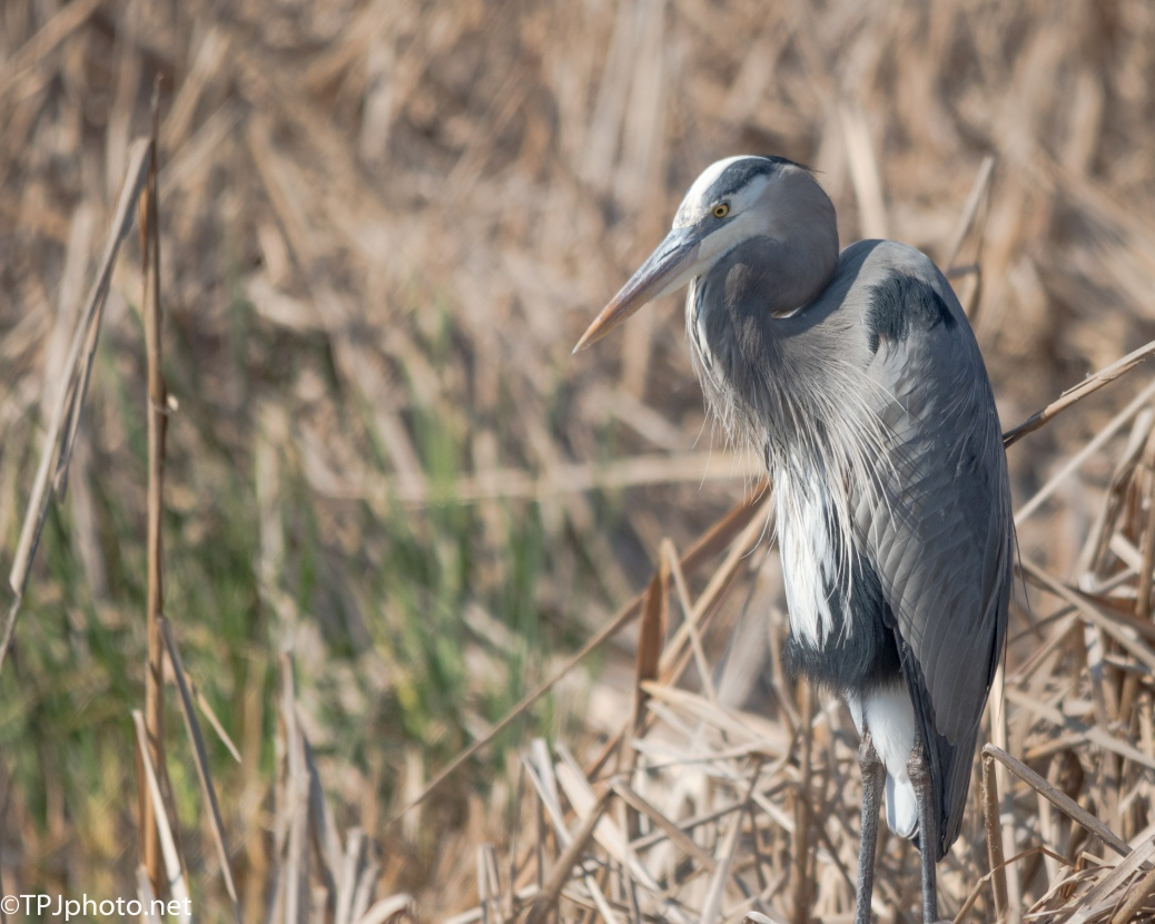 Heron As Bokeh Effect Example - Click To Enlarge