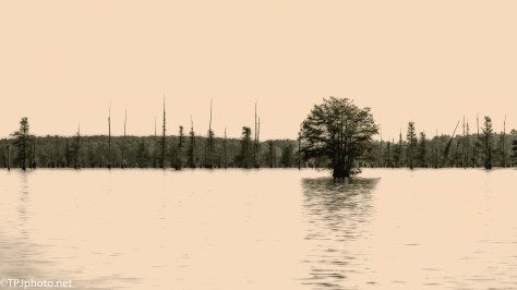 Santee Swamp, Diffusing / Softening Photographs - Click To Enlarge