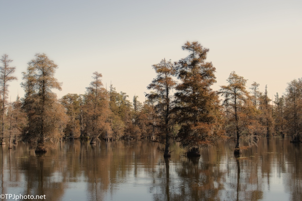 Santee Swamp, Diffusing / Softening Photographs - Click To Enlarge