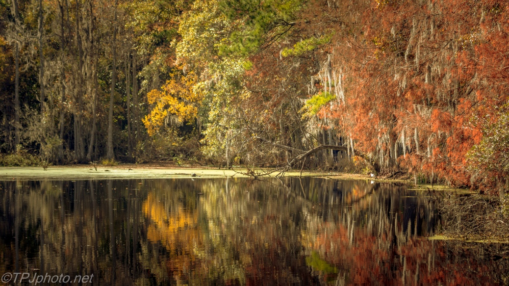 Fall Colors In A Swamp - Click To Enlarge