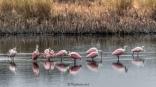 Flock Of Spoonbills - Click To Enlarge