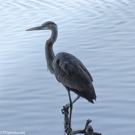Heron In The Shadows - Click To Enlarge