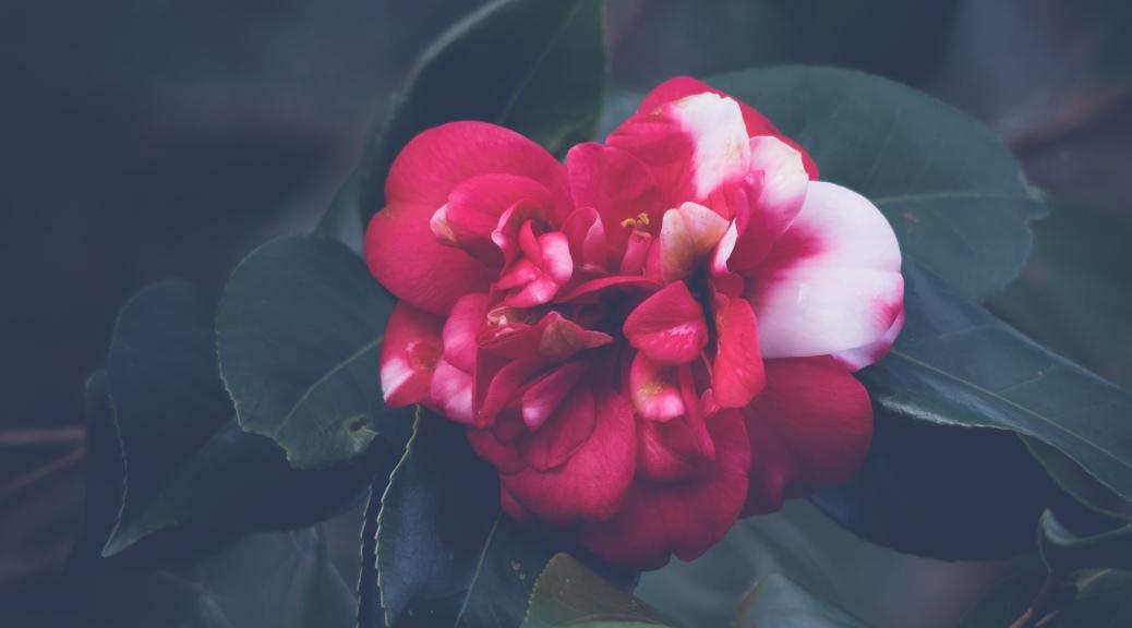 Swamp Flower - Click To Enlarge