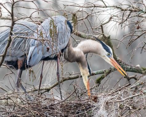 Heron Fixer Upper Nest - Click To Enlarge