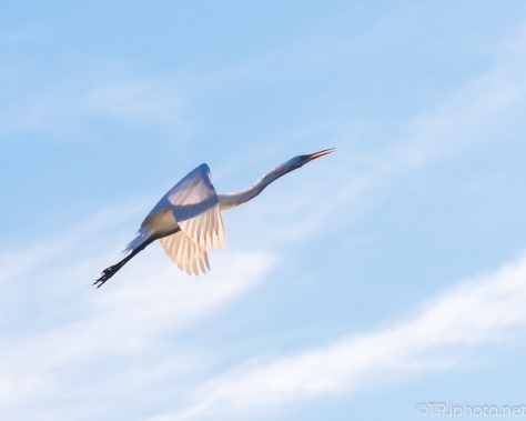 Egret, Transparent - Click To Enlarge
