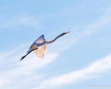 Egret, Transparent - Click To Enlarge