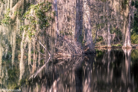 Swamp Reflections - Click To Enlarge