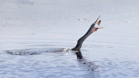 More Flippin Fish - Click To Enlarge