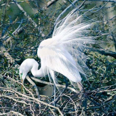 Egret Displays - Click To Enlarge