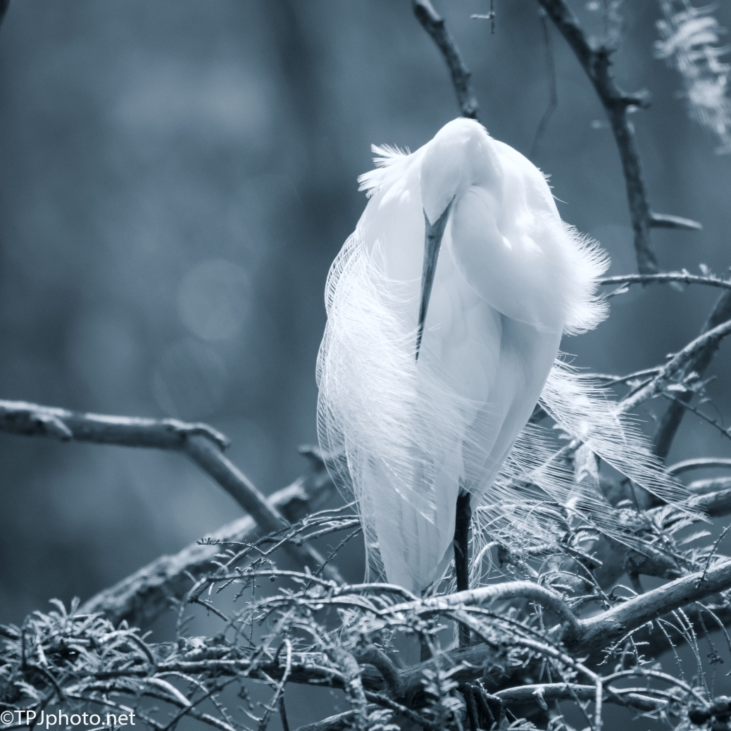 Simple Egret Image In Soft Tones - Click To Enlarge