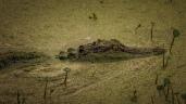 Concealment, Alligator - Click To Enlarge
