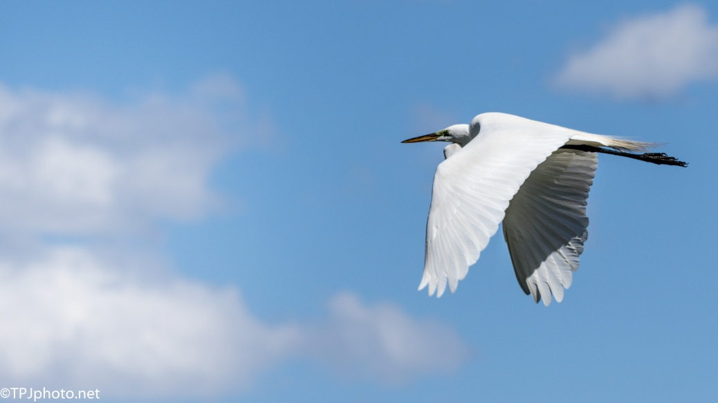 White Egret, Blue Sky - Click To Enlarge