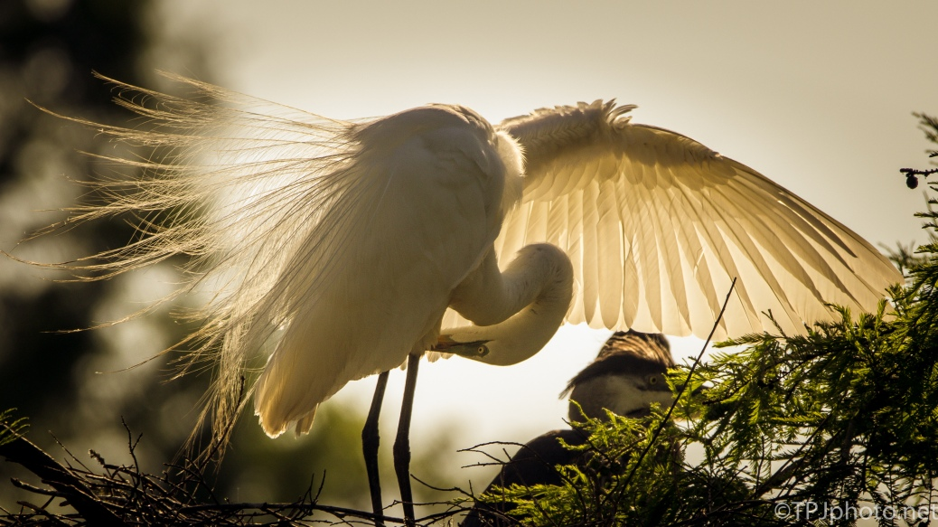 Egrets And Sunset - Click To Enlarge