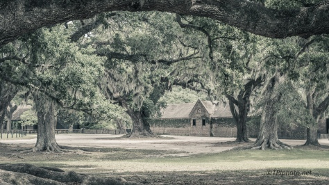 Old Plantation Stable - Click To Enlarge
