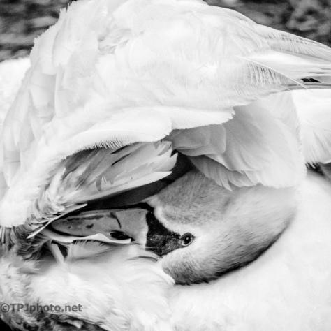 Swan, Kodak 100 TMax Pro Filter