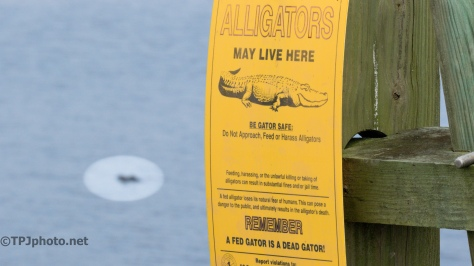 Alligators May Live Here - Click To Enlarge