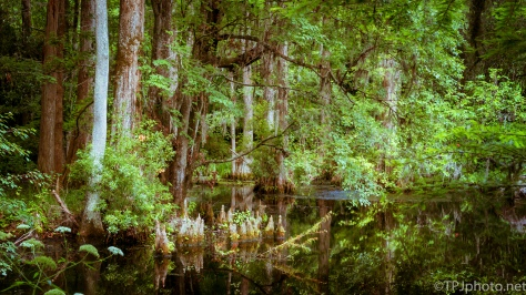Reflections In A Swamp - Click To Enlarge