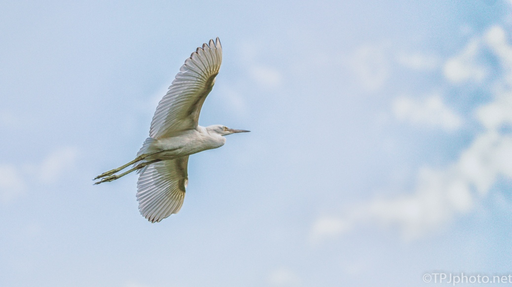 Big Blue Sky, Little Blue Heron - Click To Enlarge