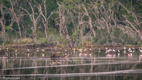 Late Spoonbill Landscape - Click To Enlarge