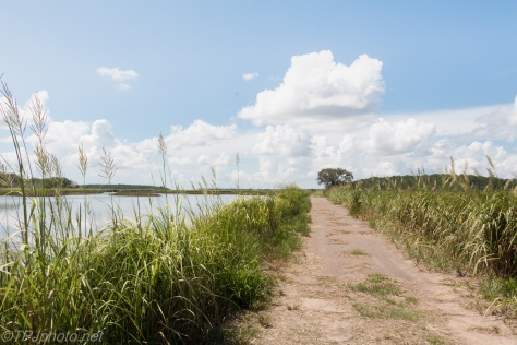 Walking Along The Dikes - Click To Enlarge