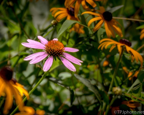 One Stands Out - Click To Enlarge