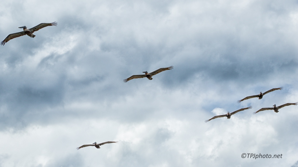 Storm Coming, Pelicans Knew - Click To Enlarge