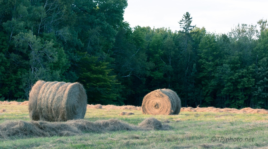 Fresh Bales, End Of Day - Click To Enlarge