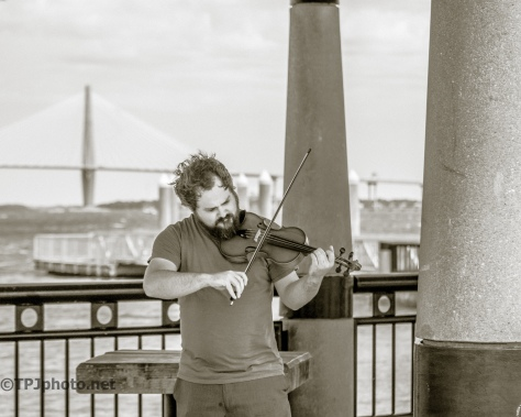 Charleston Fiddler - Click To Enlarge