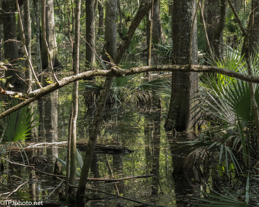 Deep Swamp - Click To Enlarge