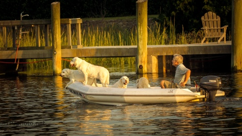 A Dogs Life - Click To Enlarge